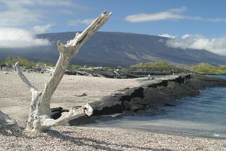 Cala de la Costa Fernandina, lles Galápagos, Ecuador. Foto: Huw Lewis.