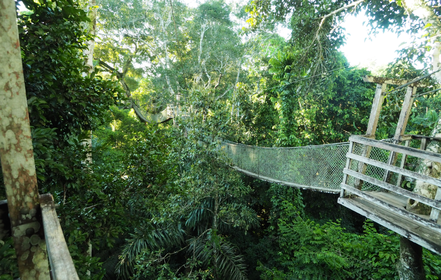 Canopy walk in the tree tops