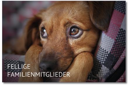 Bild zum Thema Finanzierung Tieroperationen, Tierpflege und Tieren an sich