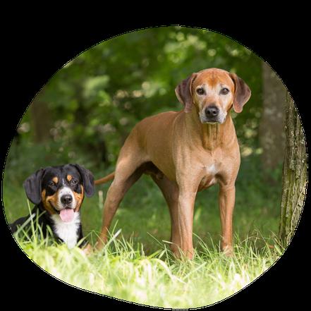 Hunde Nelson und Champi