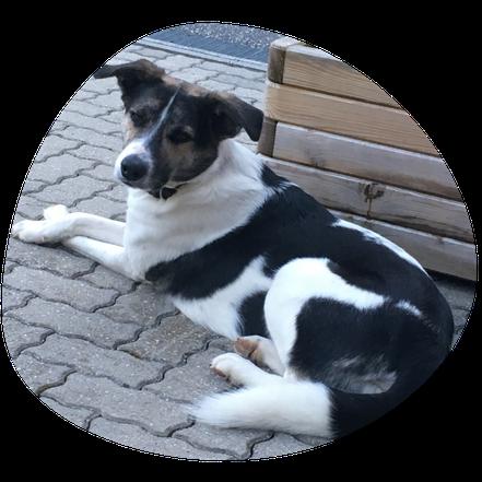 Hund Tobi