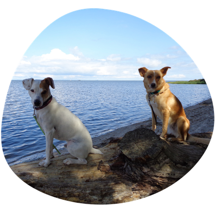 Hunde Miliki (weiss) und Fina (hellbraun)