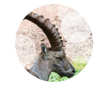 Edelstenen en aromatherapie voor de Steenbok