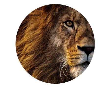 Edelstenen en aromatherapie voor de leeuw