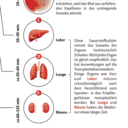 Illustrationen der Organe © Michael Stünzi