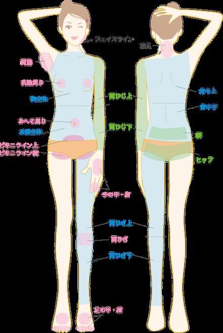 フェイスライン・両脇・乳首周り・胸全体・おへそ周り・お腹全体・ビキニライン上・ビキニライン横・両ひじ上・両ひじ下・手の甲・指・両ひざ上・両ひざ・両ひざ下・襟足・背中上・背中下・腰・ヒップ