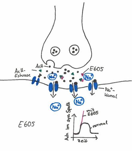 Abb. 5: Synapsengift E605