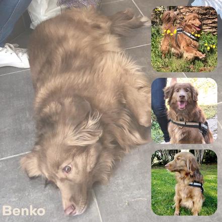 BENKO adopté en août 2019