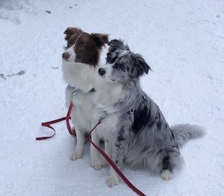Yamila (blackmerle) + Zahai (chocolate) - beides Rainbow Kinder