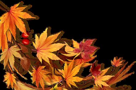 Tube Herfst bladeren