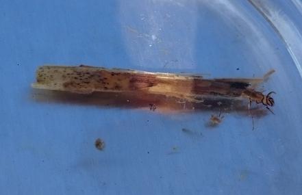 Blog unser schwimmteich im jahresverlauf biopond f r for Algenplage im teich