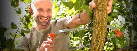 M-Franz Muthenthaler - Wein und Obstbau / Bäumeschneiden - ZUR HOMEPAGE