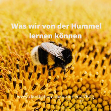 Hummel, lernen, liebe, coaching, Glück, Beziehung, liebe, Coaching, Claudia Hummelbrunner, Love Caoaching