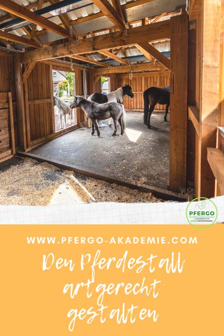 Ergotherapie für Pferde: Mit PFERGO den Pferdestall artgerecht gestalten