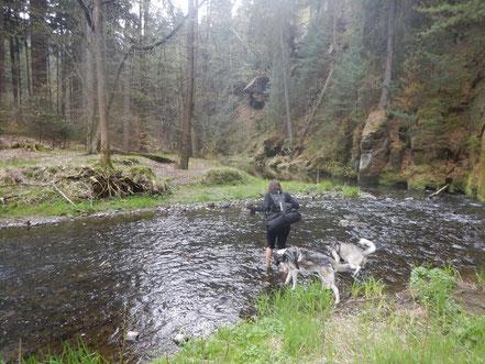 Elbsandstein - Dogtrekking Dogtrekking Dogtrekking Dogtrekking Elbsandstein-Dogtrekking ESDT Harz-Dogtrekking
