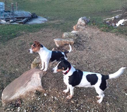 Hunde bei Pferdeparadies Palmetshofer