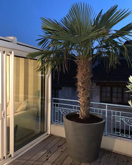 aménagement et decoration végétal d'une terrasse Parisienne