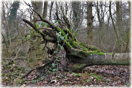 Der Naturwald