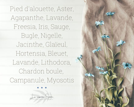 Liste de fleurs bleues : campanule, myosotis, freesia, hortensia, bleuet, nigelle, iris, aster etc par La cinquieme saison.