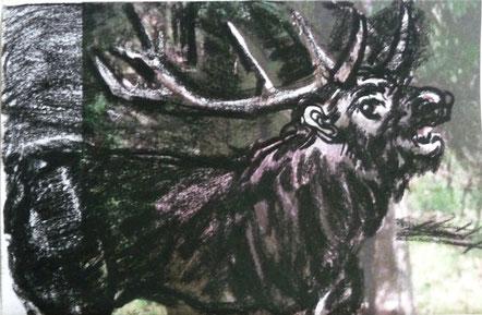 König des Waldes 9,8 x 14,8 Kohle 2017