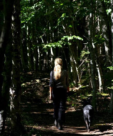 HINEIN IN DEN 300 JAHRE ALTEN *OLD GROWTH FOREST*