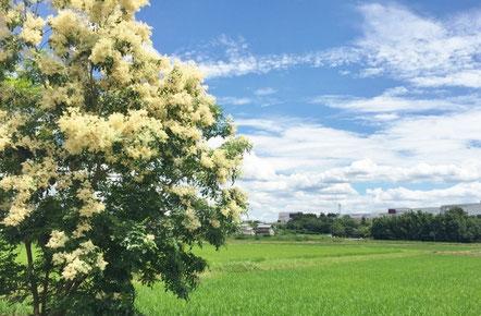 のんびりとした田舎の景色