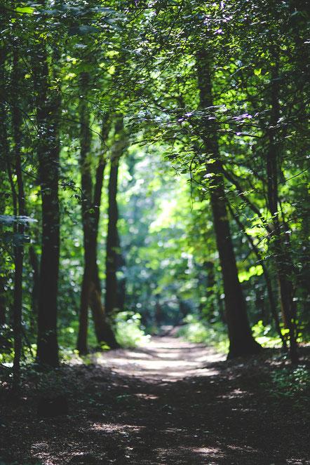 Ein Waldweg. Waldbaden ist mehr als ein Waldspaziergang