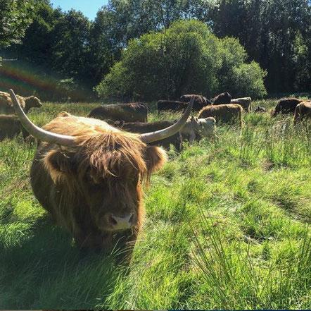 troupeau et biodiversité de la ferme bio de la Millanchère