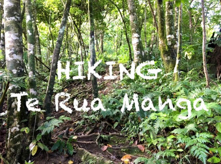 Hiking Te Rua Manga, Mountain hiking Rarotonga, Free things to do in Rarotonga,