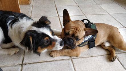 pension chien hérault