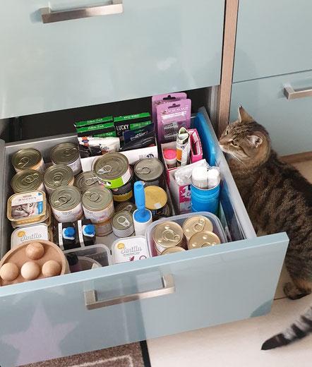 Katze Hermine und ihr Futter