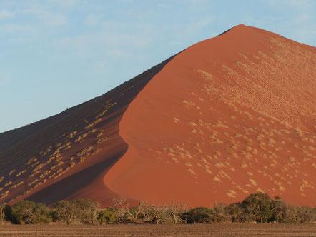 Bild: Wüste Namibia Afrika Sossusvlei