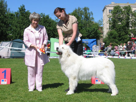 Lumienkelin Amatsoni 3 years old winning BOB & Estonian Winner 2008 title under judge Elina Haapaniemi, Finland