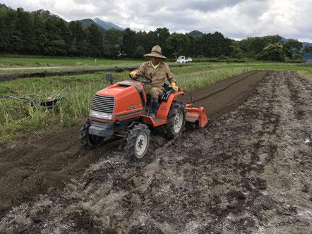 2019年6月11日 ニンニクの栽培畝に堆肥、牡蠣殻石灰を入れ耕運。