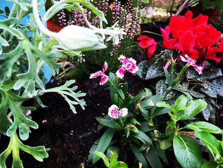 モデルガーデンの花壇