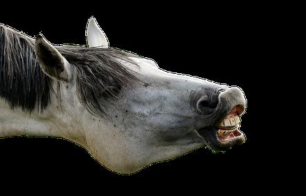 Chiropraktik für Tiere Tierarztpraxis zur Schmiede Henggart