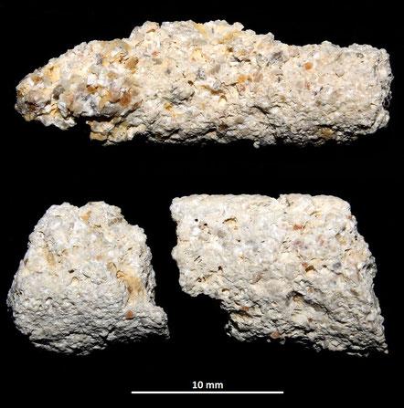 Tracce di tubazione alimentare da attribuire probabilmente a vermi che vivono sotto la sabbia (arenicole?)