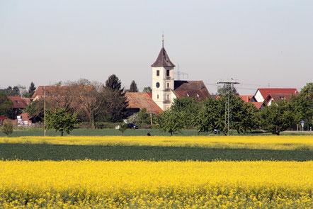 Blühendes Markgräflerland bei Seefelden