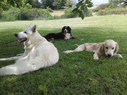 Garde chien Bordeaux