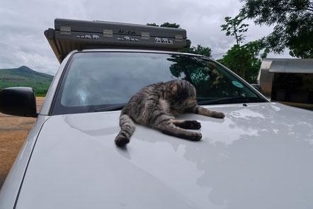 Auch in Swaziland kann man Katzen sehen :)