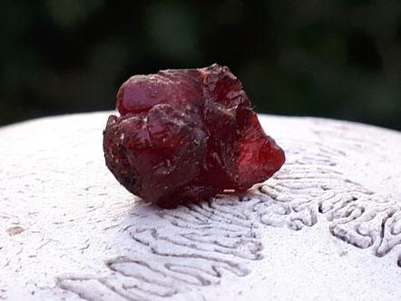 EFEU HARZ Efeuharz Sammeln Hedera helix Räucherharz Räuchern Räucherpflanze ivy resin incense Gummi Gummiresina Hederae