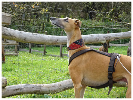 Hundetraining, Lernspaziergang, Althütte, Rems-Murr-Kreis