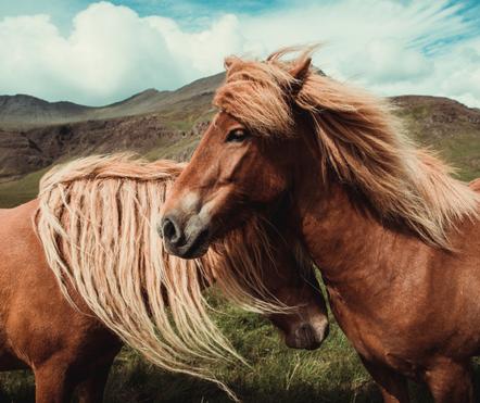 Paardencoaching, kindercoaching, systemisch coachen, paardencoach, kindercoach, paarden, Rucphen, logopedist, begeleider, autisme, hoogsensitiviteit, hoogebegaafdheid, depressie, inzichten, ontwikkeling, mindfullness, ouder en kind, ouderschap, gezin