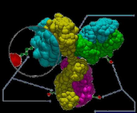 Conjugué anticorps-médicament