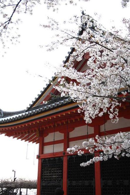 Sakura et Kyodo (salle des sutra)