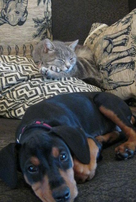"""Oki-Suraya (10 Wochen alt) und Katze """"Mia"""" haben sich schon """"angenähert"""" ;-))"""