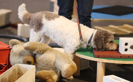 Kleinst-Objekt-Suche KOS ARO Hundetraining