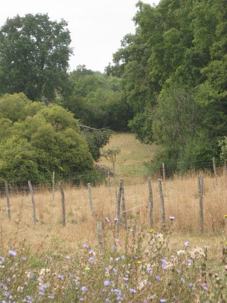 Une vue sur la biodiversité de notre ferme