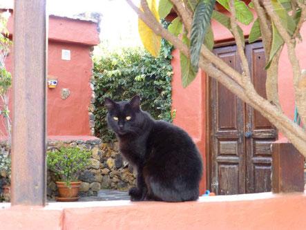 Homöopathie für Katzen bei Durchfall