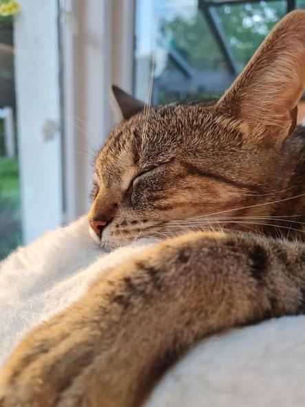 Katzenmädchen Fibi ist wirklich ein Unikat! :-)